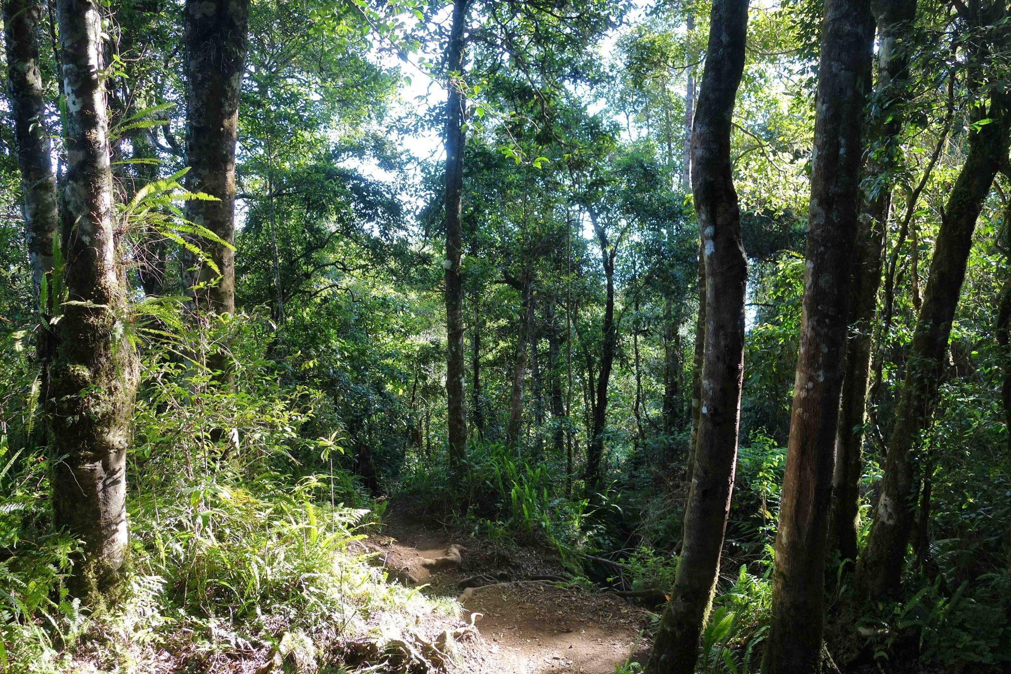 Tropical forest in Senaru trail