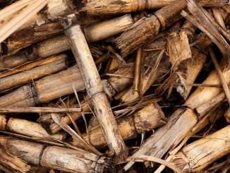 ANIE Rinnovabili dice no agli incentivi solo per le biomasse