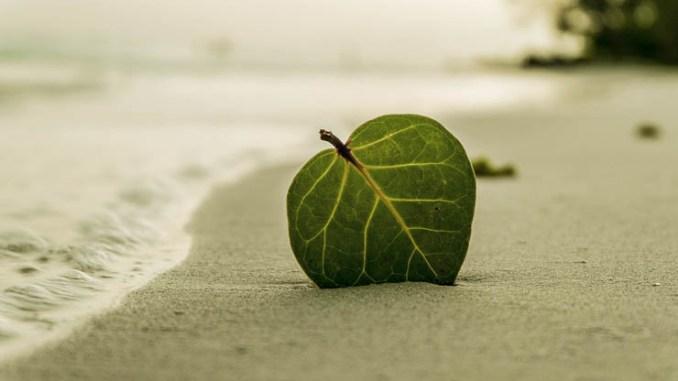 EGP e CCE, energia pulita dalle onde del mare