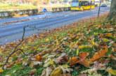Bäume im Hitzestress: Blätter fallen früher