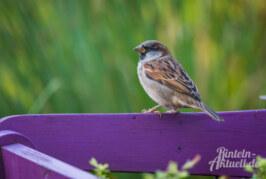 Goldene Regeln zur Vogelfütterung im Winter