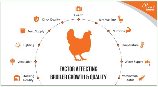 Factors Affecting Broiler Growth & Quality