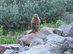 A marmot showing off for the camera on our last day. (Photo by Olivia)