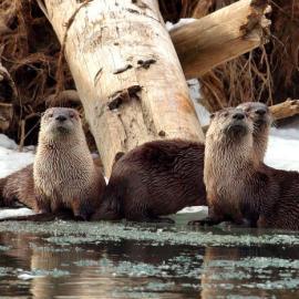 Sierra Club Fall Talk – Wednesday, September 6
