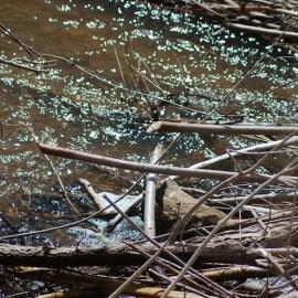 Beaver-treated water in Santa Fe