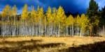 Forest Service failing Carson, Cibola, Santa Fe National Forests