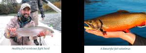 Big fall trout