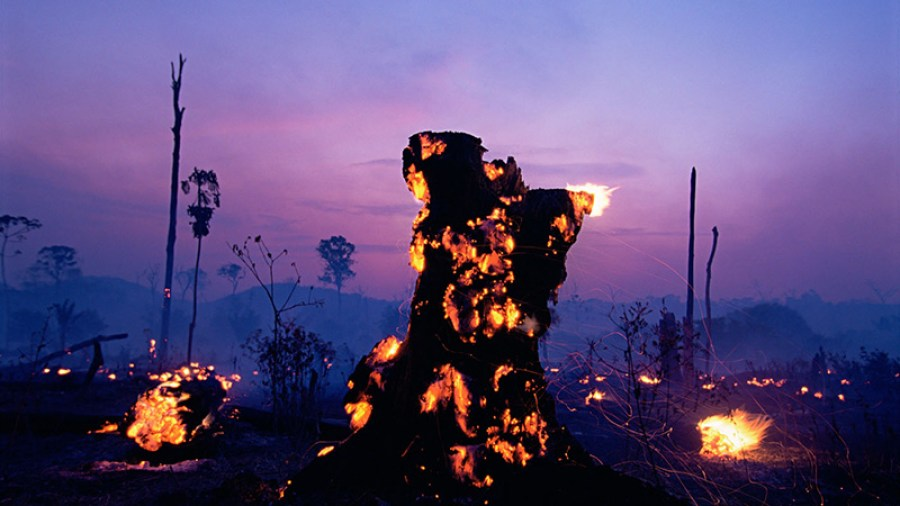Brazilian Amazon Burns