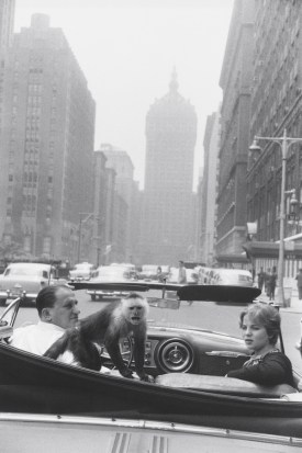 Garry Winogrand. Park Avenue, New York, 1959 [monkey in car, vertical]