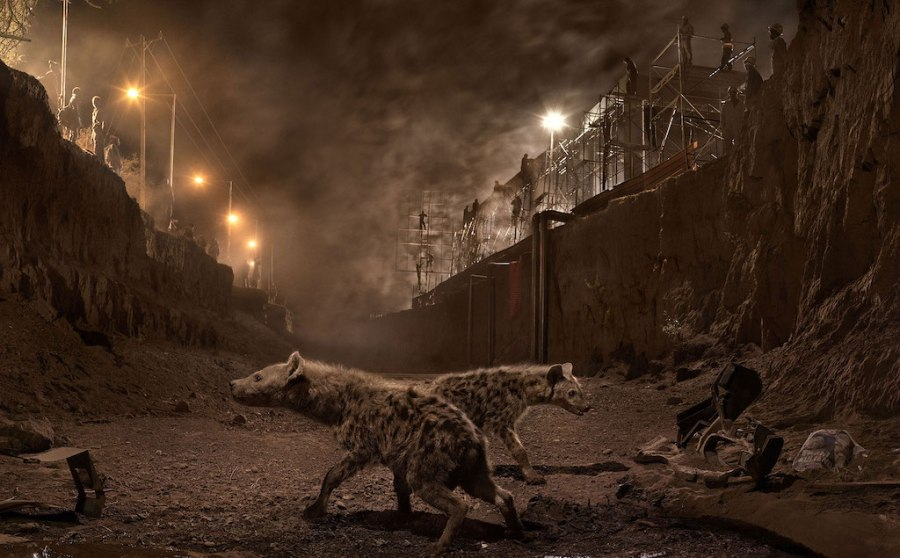 An interview with photographer Nick Brandt, at Riot Material magazine.