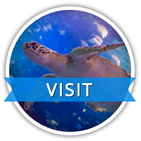 VISIT Ripleys Aquarium of Canada Toronto