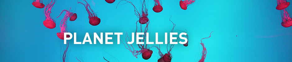 planet jellies - ripleys aquarium of canada