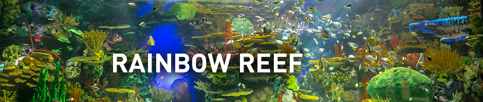 rainbow reef aquarium of canada