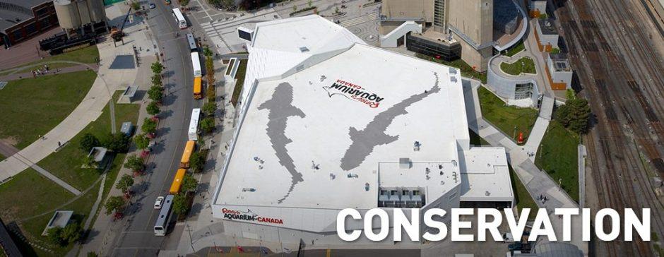 conservation-banner