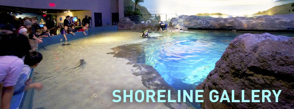 ShorelineGallery