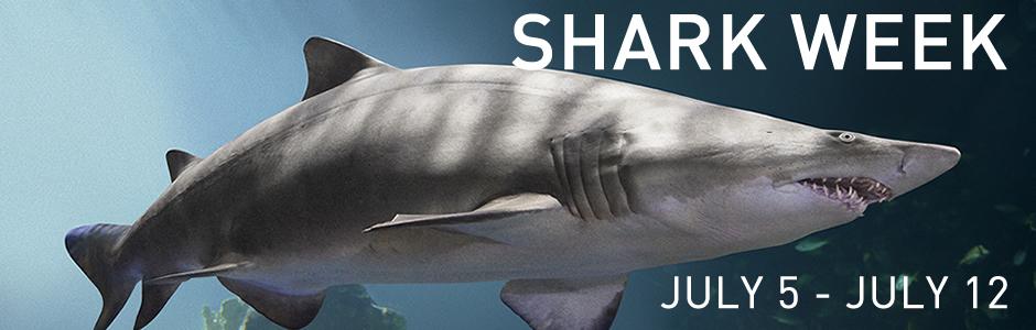 SharkWeekHeader