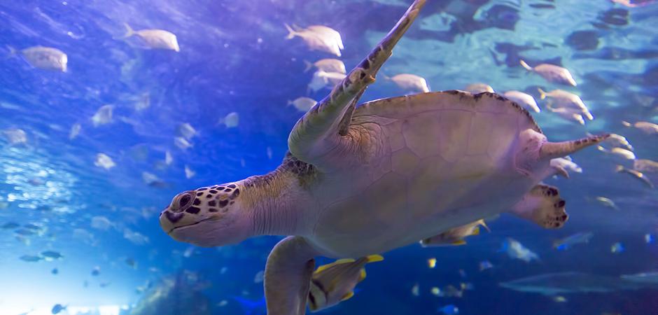 Dangerous Lagoon Aquarium Of Canada