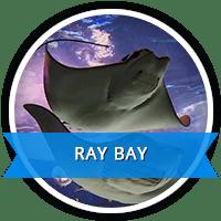 ray bay
