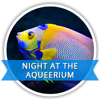 Night at the Aqueerium