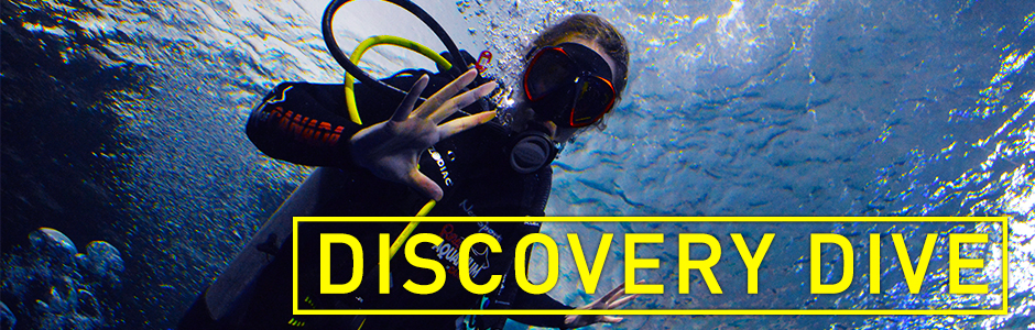 Discovery Dive