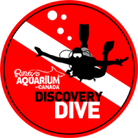 discovery-dive-badge