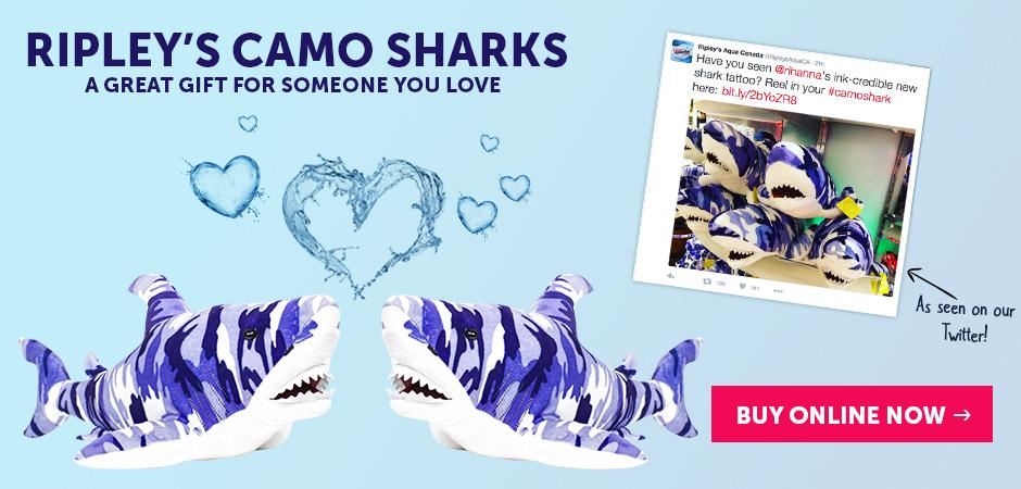 shark-slider