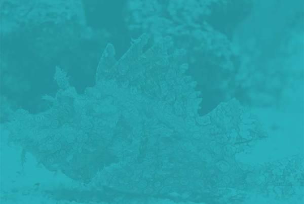 Ocean Realm