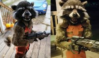 Epic 'Guardians of the Galaxy' Rocket Racoon Costume