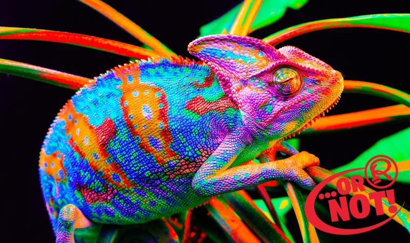 or not chameleons change