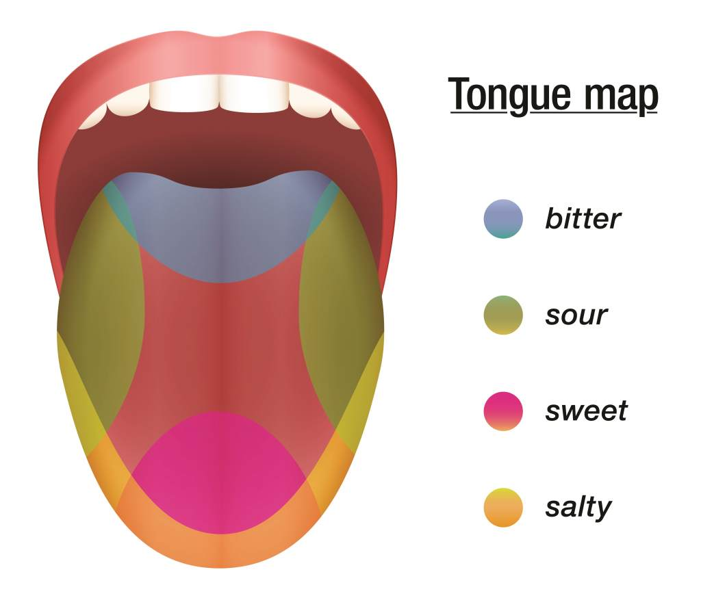 Can Only Particular Areas Of Your Tongue Taste Certain
