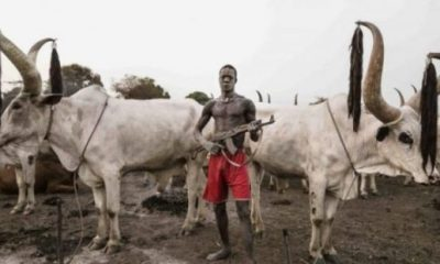 SERAP writes UN Security Council over killings by herdsmen in Nigeria