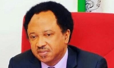 Sen Shehu Sani refuses to participate in APC senatorial primaries