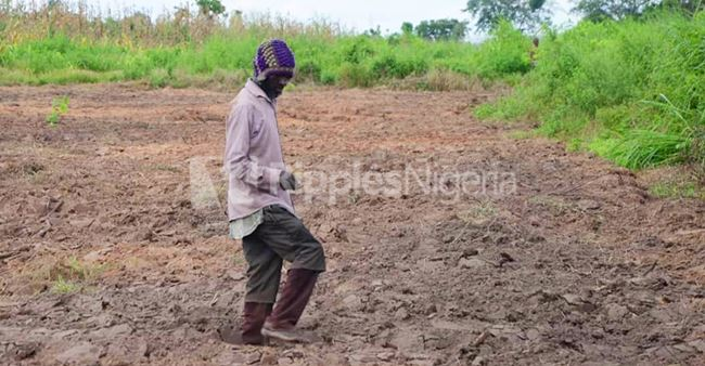 Challenges of Nigerian smallholder farmers in tackling food crisis amid COVID-19