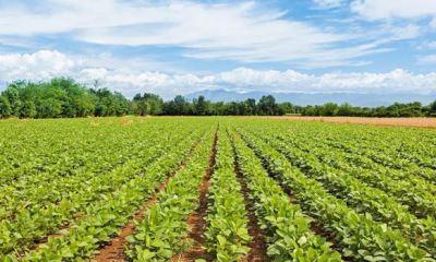Lawmakers probe N275bn agric loans disbursed under Yar'Adua, Jonathan, Buhari