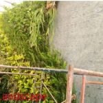 Jasa Pembuatan Vertical Garden , Tukang Taman Vertikal artivicial garden sintetis