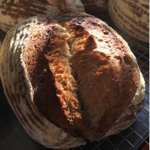 Organic White Sourdough
