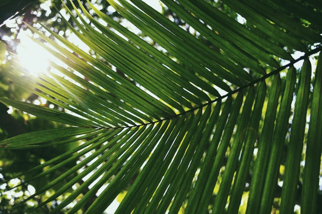 Palm Sunday – Why Jesus pleaded that we pick up our cross