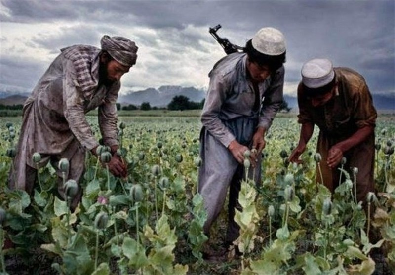 Narcotics and Insecurity: How the Afghan-Tajik Drug Trade Derails Peace