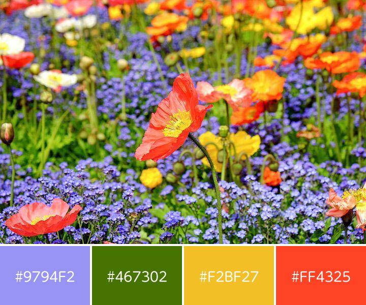 同一トーン配色-カラフルな花