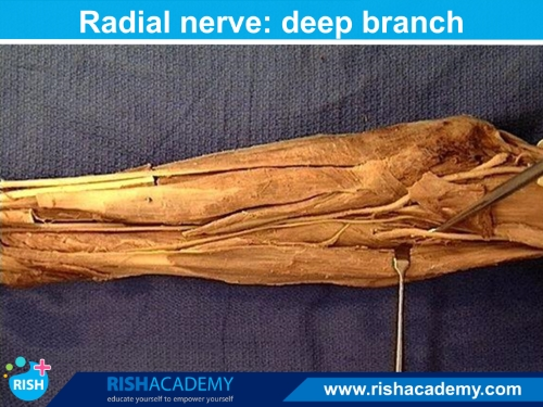 Anatomy Dissection www.rishacademy.com