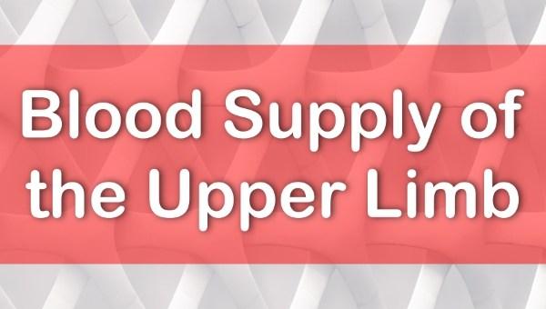 Upper Limb Blood Supply www.rishacademy.com