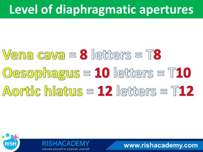 Anatomy mnemonics