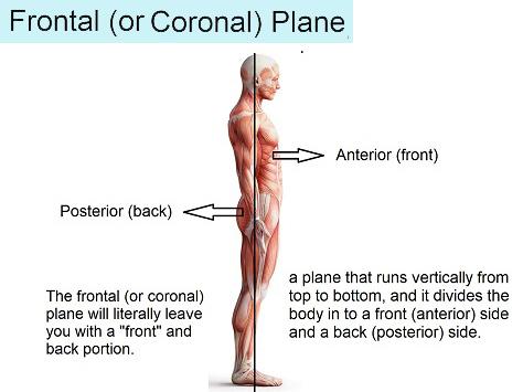 frontal-plane
