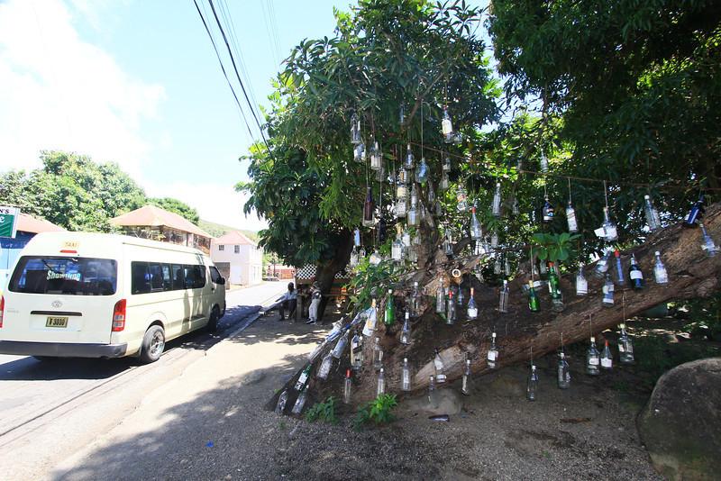 bottle tree in st kitts