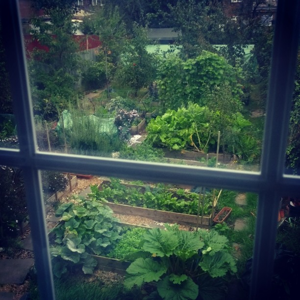 My home organic permaculture garden