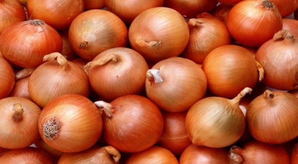 Image result for Persian shallot 'could help fight TB antibiotic resistance'