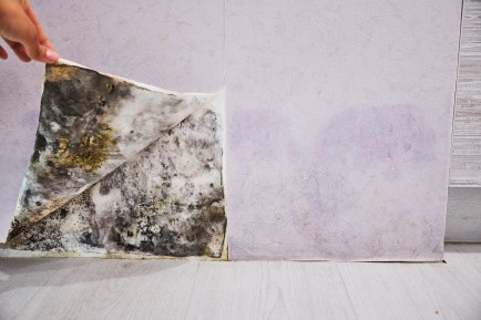 How do you prevent mold from growing after water damage