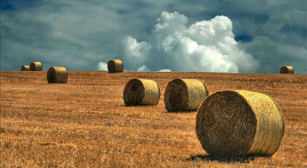 Le proposte dei socialisti per una nuova politica agricola nell'era della globalizzazione