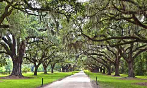 Oak Alley ved Boone Hall Plantation