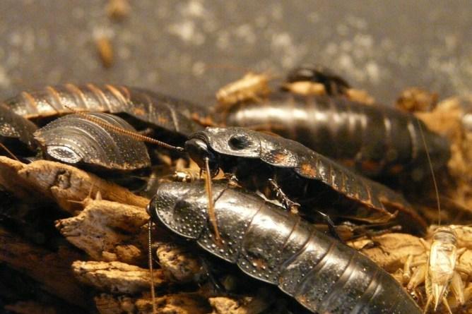 many roaches